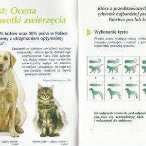 Otyłość u psów i kotów – zagrożenie ich życia