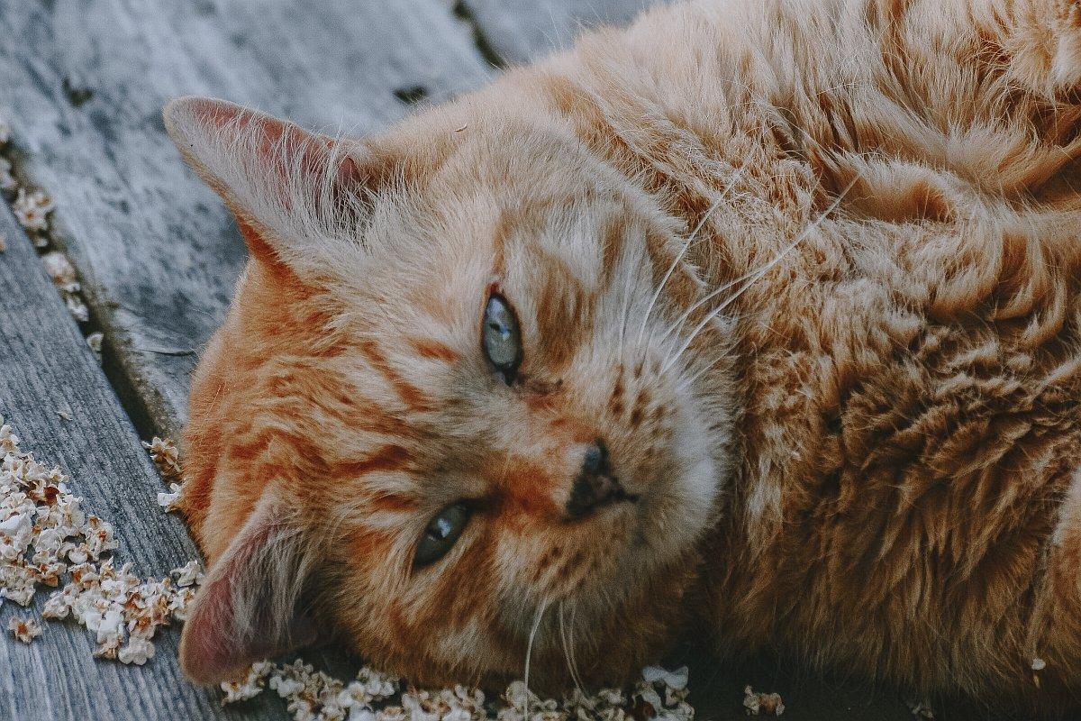 cat-foto-jacalyn-beales-rJOuDk5yX6U-unsplash
